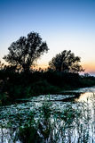 Sun setting over woods near a river. Horizontal view of sun sett Royalty Free Stock Photo