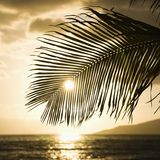 Sun setting with palm. Stock Photo