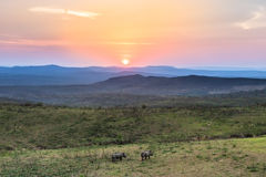 The sun setting on rhinos stock images