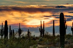 Sonoran Sunset. The sun setting on the Sonoran desert with cactus Stock Photo