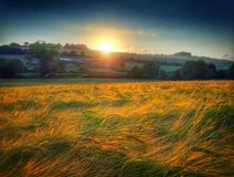 Sun setting sunset behind a field of ripening barley. Stock Images