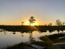 Sunburst on the cypress swamp. Sun setting in the swamps of the south royalty free stock images