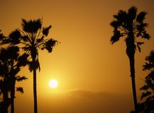 Sun setting at Venice beach Los Angelos. Showing palmtrees as a silhouette Royalty Free Stock Photography