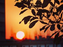 Sun is settling down. Leaves faces the sun stock photo