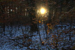 Sun and shade in the forest. In November royalty free stock image