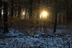 Sun and shade in the forest. In November stock photo