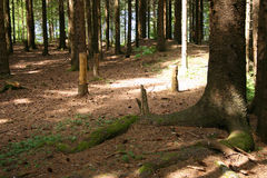 Sun and shade in the forrest Stock Photography