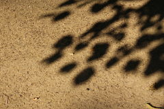 Sun and shadow. On the sand pathway Stock Images