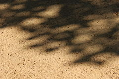 Sun and shadow. On the sand pathway Royalty Free Stock Images