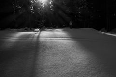 Sun and shadows on the snow in the forest Stock Photos