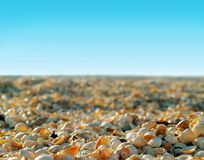 Sun shells beach. Many shells on sunny beach on blue sky background in the morning Royalty Free Stock Image