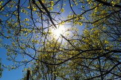 Sun shine and first green trees royalty free stock photo