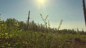 Sun shine between forest tree tops. Low-angled tracking panorama. stock video