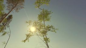 Sun shine between forest tree tops. Low-angled tracking panorama. stock footage