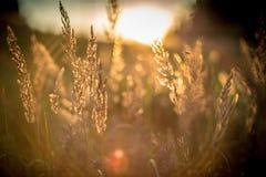 Sun shine in grass. Nature beauty detail Sun shine in grass Royalty Free Stock Image