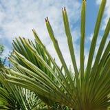 Sun shine through palm tree leaves. Sun shine palm tree california treatment hot pacific coast vacation beautiful beauty fun happy travel traveling leaves beach stock photo