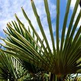 Sun shine through palm tree leaves. Sun shine palm tree california treatment hot pacific coast vacation beautiful beauty fun happy travel traveling leaves beach stock image