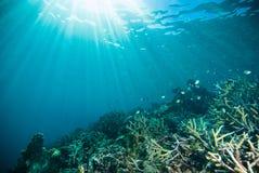 Sun shine scuba diving diver kapoposang sulawesi indonesia underwater. Life Royalty Free Stock Image