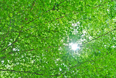 Sun shine through tree branch. Sun shine sparkling through tree branch and leaf Stock Photography