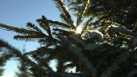 Sun shine through tree branches covered with snow. stock footage