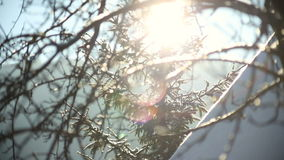 Sun shine through tree branches covered with snow. stock video footage