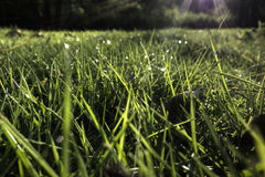 Sun shine on wet grass Stock Photo