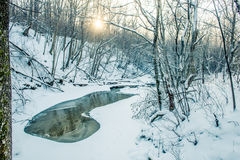 Sun shine in winter forest Stock Photography