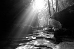 Sun shines through. Trees in rocky valley Stock Photography