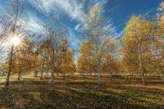 Sun shines through autumn trees. Stock Photos