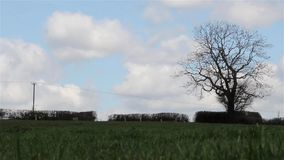 Sun Shines & Beautiful Heavenly Clouds in Blue Sky Above Grass Field Lonely Tree - Cloud scape, Beautiful Countryside Nature Scene stock video footage