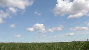 Sun Shines & Beautiful Heavenly Clouds in Blue Sky Above Grass Field Lonely Tree - Cloud scape, Beautiful Countryside Nature Scene stock footage