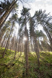 Sun shines through black forest, Germany Royalty Free Stock Photo