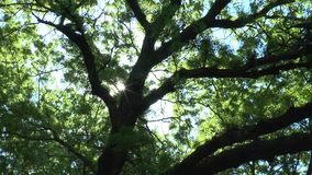 The sun shines through the branches of an old The camera moves stock footage