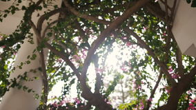 Sun shines through branches. Old white columns overgrowned with ivy and flowers. Cyprus stock video footage