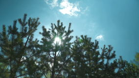 The sun shines through the branches stock footage