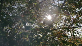 Sun shines through the branches of tree close-up stock video