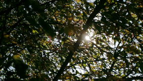 Sun shines through the branches of tree close-up. Sun shines through the branches of green tree close-up stock footage