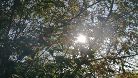 Sun shines through the branches of tree close-up stock video footage