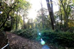 Sun in the Forest flaring. The sun shines through the branches of the trees in the forest Royalty Free Stock Photo