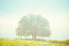 Sun shines down around the tree. royalty free stock images