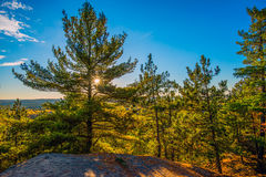 Sun Shines Through Evergreen Trees on a Cliff Stock Photos