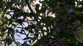 Sun shines through green leaves.  stock footage