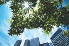 The sun shines through the green leaves. And tall buildings summer nature landscape light tree outdoor background environment spring natural sunshine season royalty free stock photos