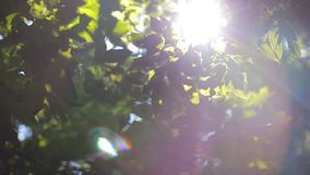 The sun shines through the green leaves of the tree. Sun shines through the green leaves of the tree stock video