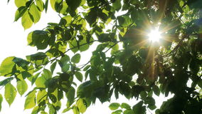 Sun shines through green leaves stock footage