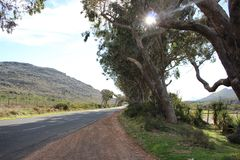Road to nowhere. Sun shines through holes in tree on the curve of the road going into infinity Royalty Free Stock Photo