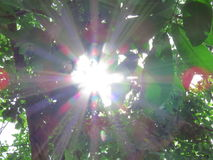 The sun shines through the leaves. Stock Photography