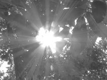 The sun shines through the leaves. Royalty Free Stock Image