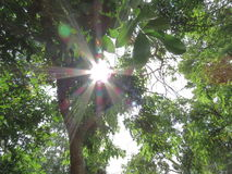 The sun shines through the leaves. Royalty Free Stock Images