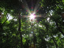 The sun shines through the leaves. Royalty Free Stock Photos